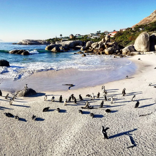Beach with Penguins Milling About_July2018