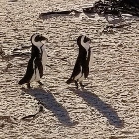 Two Penguins July 2018