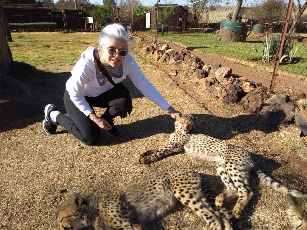 3 Cheetah kittens sunning at Rhino and Lion Safari Park, South Africa